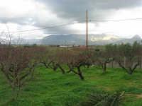 C/da Bosco Falconeria - la campagna - 7 dicembre 2008  - Balestrate (1136 clic)
