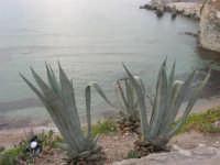 Spiaggia La Praiola - 23 settembre 2007   - Terrasini (1517 clic)