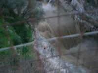Fiume Caldo - 8 febbraio 2009   - Calatafimi segesta (3295 clic)