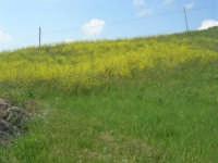 la campagna a primavera - 3 maggio 2009  - Buseto palizzolo (1651 clic)