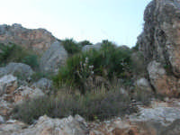 Riserva Naturale Orientata Zingaro - flora - 24 febbraio 2008  - Riserva dello zingaro (2000 clic)