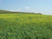 la campagna a primavera - 3 maggio 2009    - Buseto palizzolo (1668 clic)