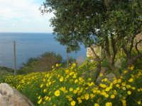 panorama - 19 aprile 2009  - Riserva dello zingaro (1613 clic)