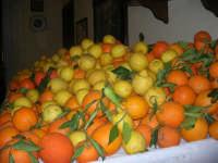 Gli altari di San Giuseppe - arance e limoni da donare ai visitatori - 18 marzo 2009   - Balestrate (3677 clic)