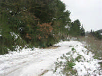 neve sul monte Bonifato - 15 febbraio 2009   - Alcamo (2669 clic)