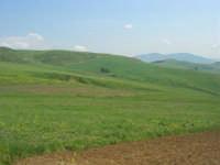 la campagna a primavera - 3 maggio 2009  - Buseto palizzolo (1742 clic)