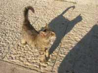 Piazza Petrolo: un simpatico gattino tenta l'approccio - 17 novembre 2009   - Castellammare del golfo (1812 clic)