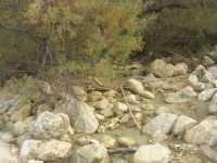 Cala Mazzo di Sciacca - torrente - 29 novembre 2009  - Castellammare del golfo (1305 clic)