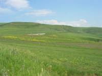 la campagna a primavera - 3 maggio 2009  - Buseto palizzolo (1652 clic)