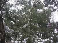 neve sul monte Bonifato - Riserva Naturale Orientata Bosco d'Alcamo - 15 febbraio 2009               - Alcamo (2139 clic)