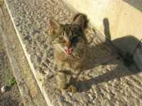 Piazza Petrolo: un simpatico gattino tenta l'approccio - 17 novembre 2009   - Castellammare del golfo (1851 clic)