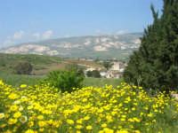 la campagna a primavera - 3 maggio 2009  - Buseto palizzolo (1687 clic)