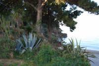 baia di Guidaloca - 3 marzo 2008  - Castellammare del golfo (548 clic)