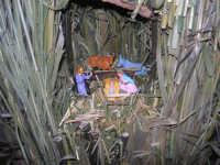 mostra di presepi presso l'Istituto Comprensivo A. Manzoni - particolare - (10) - 20 dicembre 2007  - Buseto palizzolo (974 clic)