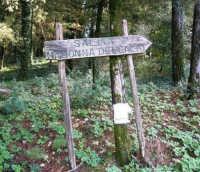 Bosco d'Alcamo - Riserva Naturale Orientata: l'indicazione sul viale che porta al Santuario della Madonna dell'Alto - 8 dicembre 2006  - Alcamo (1221 clic)