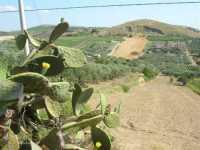 paesaggio rurale - 28 giugno 2009   - Salemi (3420 clic)