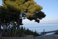 baia di Guidaloca - 3 marzo 2008  - Castellammare del golfo (538 clic)