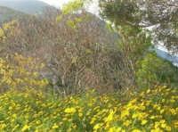 panorama - 19 aprile 2009  - Riserva dello zingaro (1476 clic)