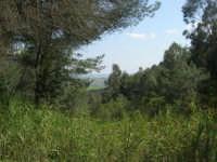 Bosco di Scorace - 3 maggio 2009  - Buseto palizzolo (1587 clic)