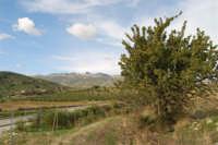 albero di azzalora e panorama della campagna in direzione di Caltabellotta - 9 novembre 2008   - Ribera (2072 clic)