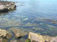 Golfo del Cofano: un mare stupendo! - 4 luglio 2009   - San vito lo capo (862 clic)