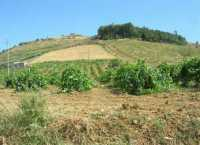 paesaggio rurale - 28 giugno 2009   - Salemi (3300 clic)