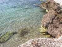 Golfo del Cofano - alghe sugli scogli - 29 luglio 2009   - San vito lo capo (2045 clic)