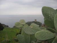 ficodindia, torre di avvistamento e vista sul golfo di Castellammare - 11 aprile 2009   - Scopello (2566 clic)