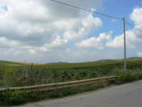 i campi (oltre la strada una piantagione di carciofi) - 1 maggio 2007  - Fulgatore (3127 clic)