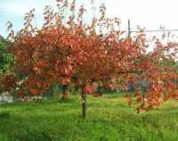 i colori dell'autunno - 19 novembre 2009   - Alcamo (2224 clic)