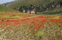alle falde della Montagna Grande - 17 maggio 2009   - Fulgatore (1495 clic)