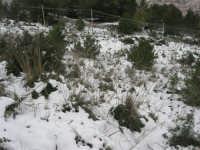 neve sul monte Bonifato - 15 febbraio 2009     - Alcamo (2467 clic)