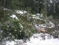 neve sul monte Bonifato - Riserva Naturale Orientata Bosco d'Alcamo - 15 febbraio 2009               - Alcamo (1958 clic)
