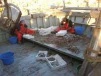 selezione del pesce al rientro dalla pesca - 7 dicembre 2009   - Agrigento (4952 clic)