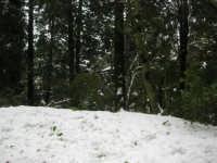 neve sul monte Bonifato - Riserva Naturale Orientata Bosco d'Alcamo - 15 febbraio 2009               - Alcamo (2008 clic)