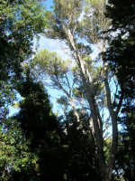 Bosco d'Alcamo - Riserva Naturale Orientata - sul monte Bonifato - 8 dicembre 2006  - Alcamo (998 clic)