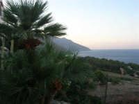 palma nana e golfo di Castellammare in direzione della Riserva Naturale dello Zingaro- 19 settembre 2007  - Scopello (906 clic)