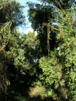 Bosco d'Alcamo - Riserva Naturale Orientata - sul monte Bonifato - 8 dicembre 2006  - Alcamo (825 clic)