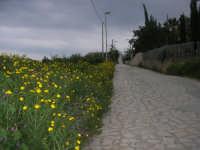 via di accesso al paese, lato nord - 11 aprile 2009   - Scopello (2001 clic)
