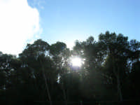 Bosco d'Alcamo - Riserva Naturale Orientata - sul monte Bonifato - 8 dicembre 2006  - Alcamo (893 clic)
