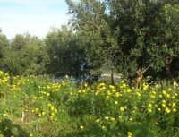 panorama - 19 aprile 2009  - Riserva dello zingaro (1649 clic)