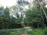 Bosco d'Alcamo - Riserva Naturale Orientata - sul monte Bonifato - 8 dicembre 2006  - Alcamo (832 clic)