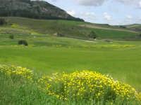 panorama dell'area archeologica - 1 maggio 2009  - Segesta (4180 clic)