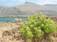 Golfo del Cofano - 27 agosto 2009  - San vito lo capo (1642 clic)