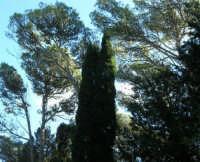 Bosco d'Alcamo - Riserva Naturale Orientata - sul monte Bonifato - 8 dicembre 2006  - Alcamo (738 clic)