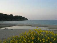 Baia di Guidaloca: foce del fiume (che non riesce a raggiungere il mare) e gabbiani - 26 aprile 2007  - Castellammare del golfo (883 clic)