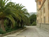 Istituto Zootecnico - Centro di Formazione SKILICA (Skliza)- 17 aprile 2006  - Piana degli albanesi (1216 clic)