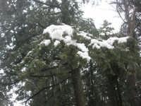 neve sul monte Bonifato - Riserva Naturale Orientata Bosco d'Alcamo - 15 febbraio 2009               - Alcamo (1789 clic)