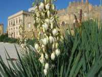 fiori nel piazzale antistante al Castello dei Grifeo - 4 ottobre 2009   - Partanna (1826 clic)