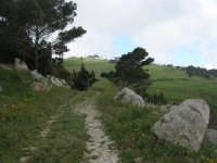 sul monte Erice - 1 maggio 2009   - Erice (2037 clic)